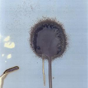 """W1"", 2008, ca. 140x100cm, water on untreated silvergelatine paper/ scanned, inkprint, 2+1 AP"