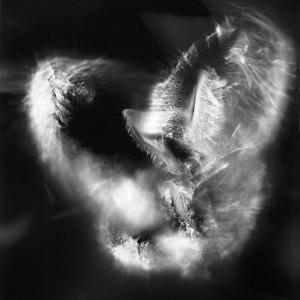 """""""Aquila No.5″, 2016, ca. 120x90cm, photogram on colorfilm/C-Print analog, 2+1 AP"""