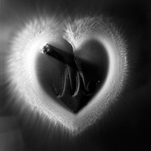 """HEART I No.4″, 2016, ca. 128x100cm, photogram on colorfilm/C-Print analog, 2+1 AP"