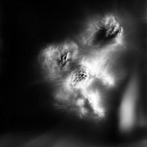 """""""Aquila IV No.1″, 2016, ca. 120x90cm, photogram on colorfilm/C-Print analog, 2+1 AP"""
